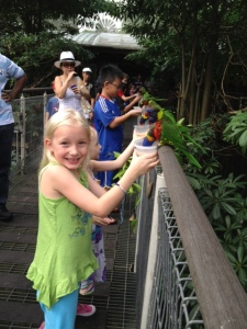 Feeding the Lories at the Bird Park